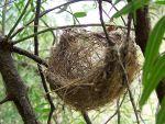 795px-Basket_style_nest